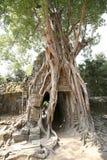 在吴哥窟,柬埔寨大厦的树  免版税库存照片