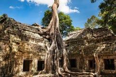 在吴哥窟,柬埔寨的Ta Phrom 免版税库存照片