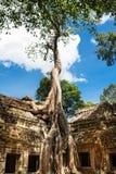 在吴哥窟,柬埔寨的Ta Phrom 免版税图库摄影