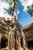 在吴哥窟,柬埔寨的Ta Phrom 库存图片