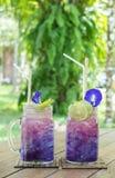 在绿园概念的清凉茶饮料,梯度紫色蝴蝶豌豆汁夫妇杯用花装饰的 库存图片