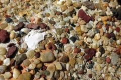 在黏土的小卵石在海滩 图库摄影