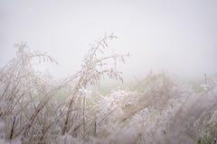 在给在有薄雾的风景的草的树冰美好的纹理 免版税库存照片