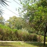 在围场的树 免版税库存照片
