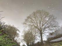 在水坑反射的树 免版税库存图片