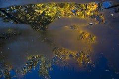 在水坑反映的秋天树 免版税库存照片