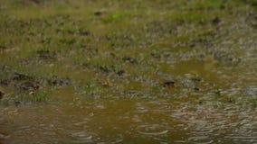 在水坑慢动作的雨 股票录像