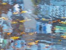 在水坑的下落的叶子 库存照片