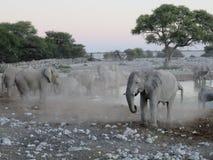 在水坑的大象牧群在埃托沙国家公园,纳米比亚,非洲 免版税库存图片