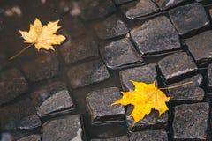 在水坑的明亮的黄色叶子在地面 库存照片