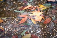 在水坑的秋叶 库存图片