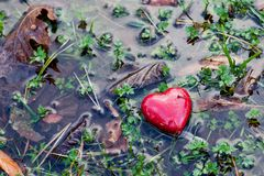 在水水坑的红色心脏在湿软的草,青苔。爱,情人节。 免版税库存图片