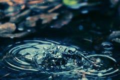 在水坑的雨下落 库存照片