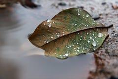 在水坑,水的秋天叶子在叶子滴下 免版税图库摄影