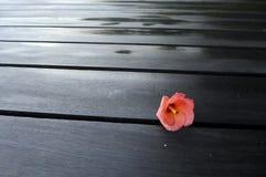 在黑坚硬木甲板露台的热带红色花 免版税图库摄影