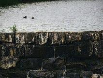 在水坝的鸭子 免版税图库摄影