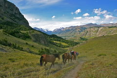 在巴塔哥尼亚小山的马在el附近的chalten 免版税库存照片