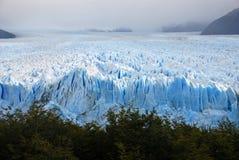 在巴塔哥尼亚的佩里托美利奴绵羊的冰川 库存图片