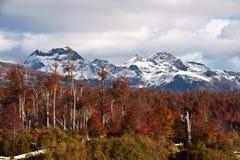 在巴塔哥尼亚的秋天。山脉达尔文,火地群岛 免版税库存图片