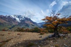 在巴塔哥尼亚的秋天 库存图片