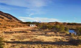 在巴塔哥尼亚阿根廷,南美的秋天浪漫风景 土气印第安人混血儿农场 吃草在黄色草的母牛 免版税库存照片
