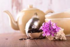 在贝壳和茶具的几支桃红色康乃馨 免版税库存照片