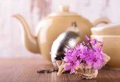 在贝壳和茶具的少量桃红色康乃馨 免版税库存图片