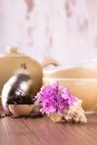 在贝壳的几支桃红色康乃馨在茶具前面 图库摄影