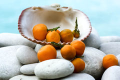 在贝壳的地中海金桔属果子 免版税库存图片