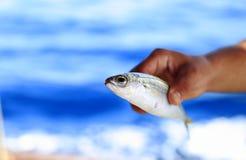 在水外面的一条鱼 免版税图库摄影