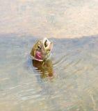 在水外面的鳟鱼渔 免版税图库摄影