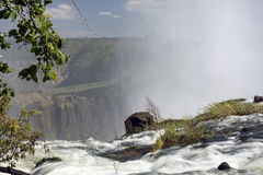 在维多利亚瀑布,利文斯东,赞比亚顶部的宽看法背景风景 免版税库存照片