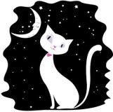 在黑夜空、星和月亮的白色猫 免版税图库摄影