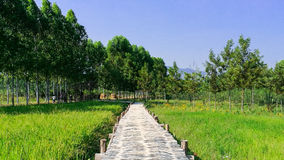 在年轻大阳台米种植园中的竹步行方式 免版税库存照片