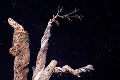 在满天星斗的天空背景的老树 图库摄影