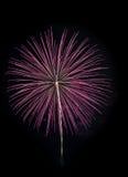 在黑天空的桃红色烟花 图库摄影