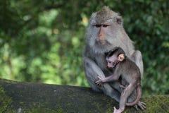 在猴子森林公园的家庭 库存图片