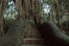 在猴子森林圣所的著名龙桥梁在Ubud,巴厘岛,印度尼西亚 免版税库存照片
