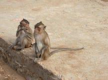 在猴子海岛上的野生猴子 免版税图库摄影