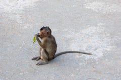 在猴子海岛上的野生猴子 库存照片