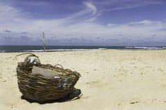 在负子蟾的爱海滩 库存照片