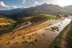 在水季节的露台的ricefield在Mu Cang柴,越南 库存照片