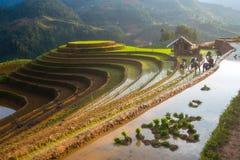在水季节的露台的ricefield在Mu Cang柴,越南 免版税图库摄影