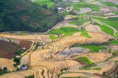 在水季节的露台的ricefield在Mu Cang柴,越南 免版税库存图片