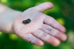 在婴孩的手上的小的青蛙 库存照片