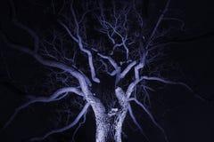 从在给它鬼下聚光的细长的冬天树 免版税图库摄影