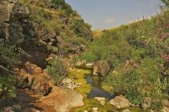 在水小河的红色花 免版税库存照片