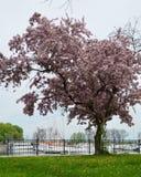 在贝尔蒙特港口的春天 免版税库存图片