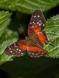 在费尔柴尔德庭院的蝴蝶 免版税库存图片