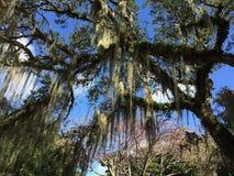 在费尔柴尔德的热带树 图库摄影